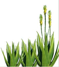 Stratinfo Aloe Solutions SRL